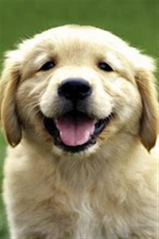 可爱小狗壁纸_360手机助手