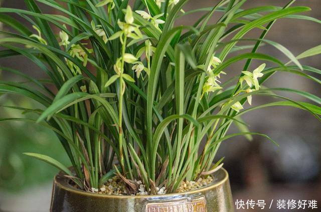 秋季给兰花喂这几种东西,保准让它越长越旺,花朵开爆盆