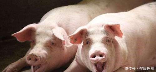 为什么中国人对猪肉情有独钟, 而美国人却喜欢