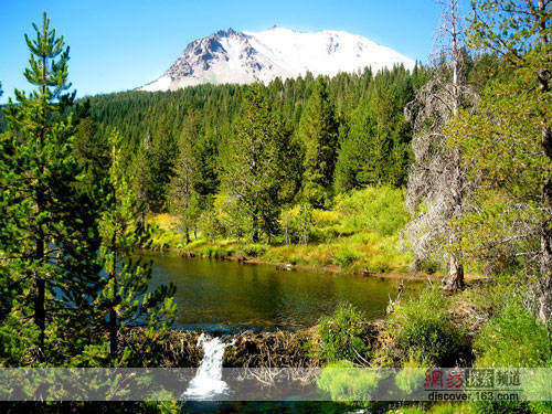 许多国家的森林面积在减少图片