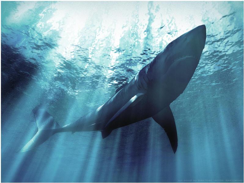 别名:镰鳍海豚、镰鳍斑纹海豚、短吻海豚。吻突很短,但与额部界线清楚。背鳍高大醒目,呈镰状后曲,基部幅广。体背部黑色或黑灰色,腹部白色,头前部和上颌黑色,下颌仅吻端黑色,其余白色。体侧眼后达腹侧为白色或灰白色,沿背路基下侧至尾基的体侧为从白色带,口角至鳍栉前基。并越过路肢后基全肛门间有一黑带。背鳍前部1/3为黑色,后半部全为灰白色。鳍肢同样前缘部黑色,后缘部灰色。尾鳍上下方皆为黑色或黑灰色。体色变异较大。上下须每侧有齿23~36枚。 成体体长可达2.