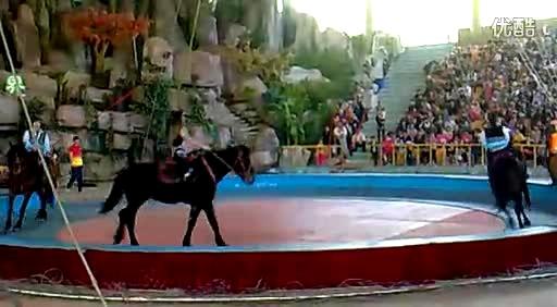 杭州野生动物园马戏团表演02