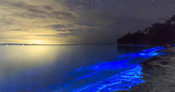 澳大利亚现蓝色荧光海滩