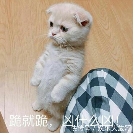 大全图片:我没事,我哭一个月就好猫咪表情包表情hi图片