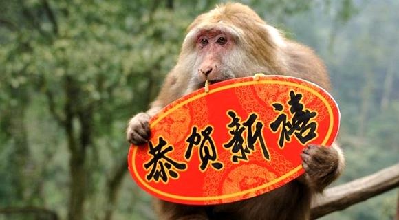 峨眉山群猴拿贺岁标语送新年祝福