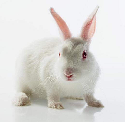 可爱的大白兔