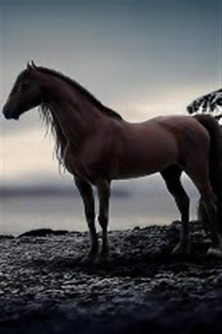 壁纸 动物 马 骑马 320