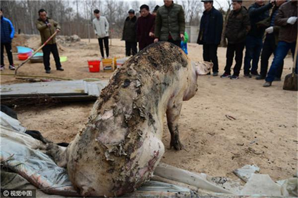 【转】北京时间      山东聊城一猪舍失火 近百头活猪被烧死 - 妙康居士 - 妙康居士~晴樵雪读的博客
