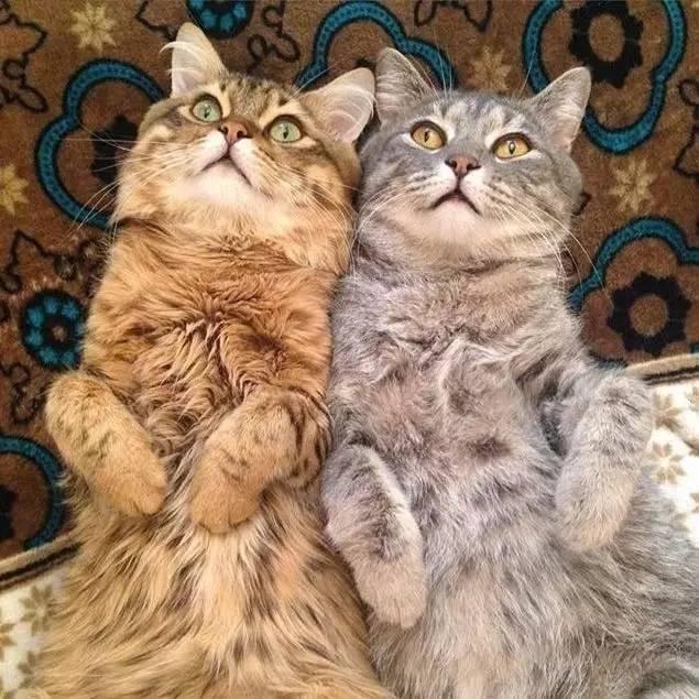 据说一对猫养久了,就会变成一毛(猫)一样~