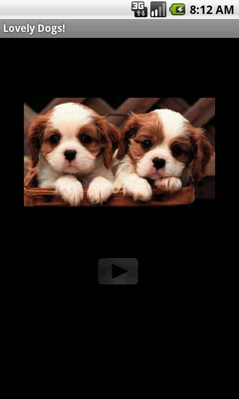 影音图像 >可爱的狗和可爱的小狗