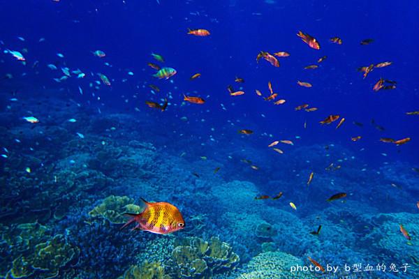 帕劳没有长滩岛和巴厘岛的喧闹,也没有马尔代夫那样奢华,但却吸引了全