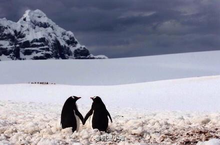 动物世界的美好 - 山高月远 - 山高月远的博客
