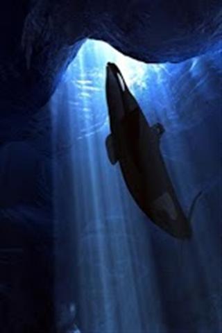 逆戟 鲸壁纸 高清版 逆戟 鲸壁纸 高清版 下载