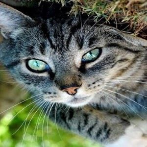 可爱的猫宠物壁纸