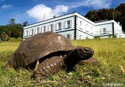 189岁高龄巨龟成为最老陆生动物 老当益壮还有三位伴侣