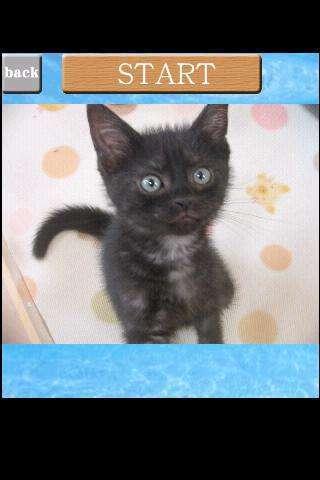 《 猫咪拼图 2 》截图欣赏