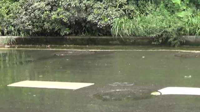 下水道堵塞污水横流,持续2周无人管