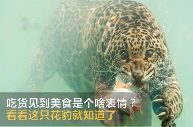 笑哭!一只花豹用表情完美演绎了是穷一只猪何一只猴的表情图图片