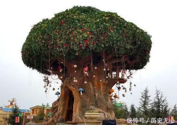 心理测试哪棵大树最有灵性测你这辈子还能不能出人头地