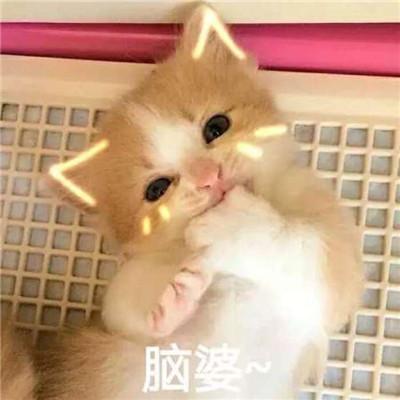 2018猫咪可爱带字搞笑头像qq群头像