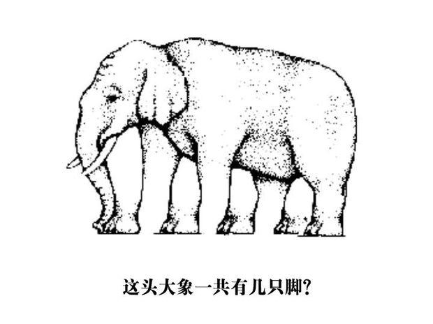 这头大象有多少条腿?