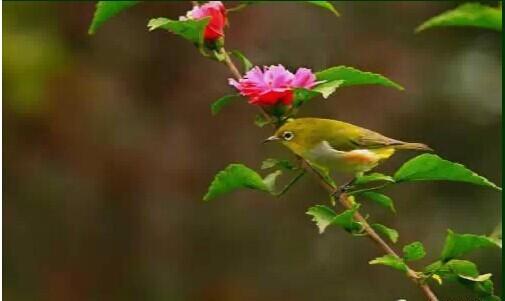 Rose【太美了,送给你欣赏!】(5461) - Rose - Rose Yang的博客