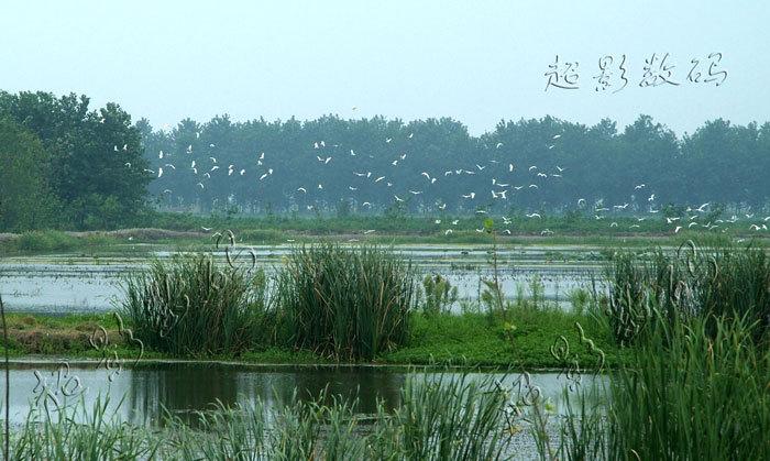 里下河兴化; 徐马荒风景区-江苏省门户网-告诉您当地