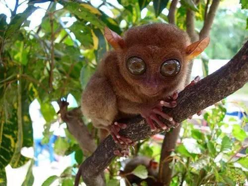 遇见世界上最小的猴子