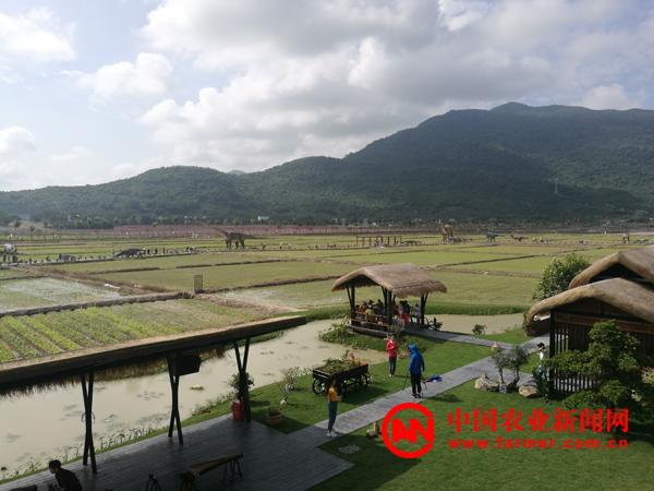 三亚海棠湾水稻国家公园开园