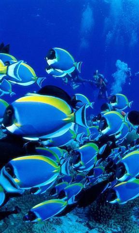 动态海底世界壁纸_360应用