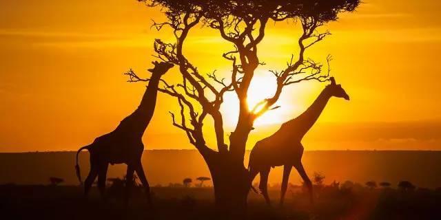 你以为非洲很穷,那是你没见到他奢华的另一面