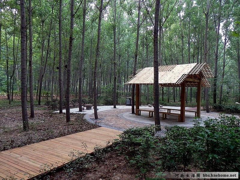 郑州森林公园图片