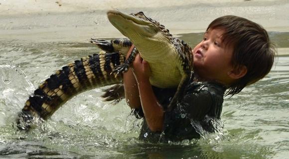 澳男孩1岁抓蛇3岁摸鳄鱼 与猛兽亲密似好友