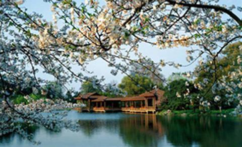 上海青浦淀山湖梅园坐落在淀山湖风景区内,位于上海市青浦区西面,距