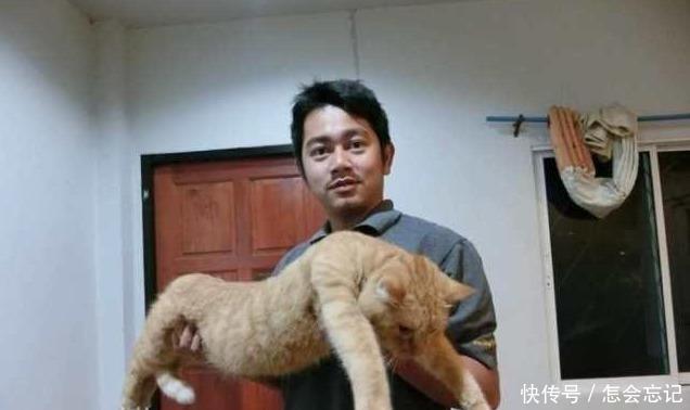 橘猫怎么吃都不胖, 主人一抱起来, 猫咪: 完了, 没