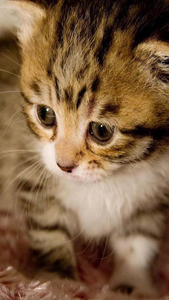 软件 壁纸主题 >猫星人动态壁纸  应用介绍 可爱的猫咪,卖萌的表情,无
