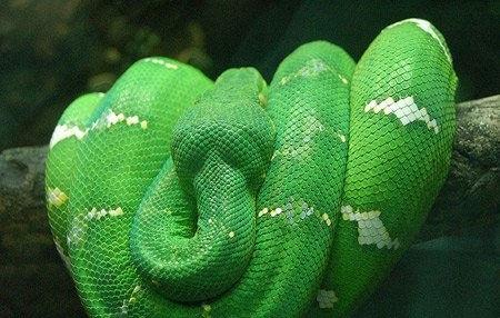 盘点全球十大最漂亮的宠物蛇,第八个小的过分啊