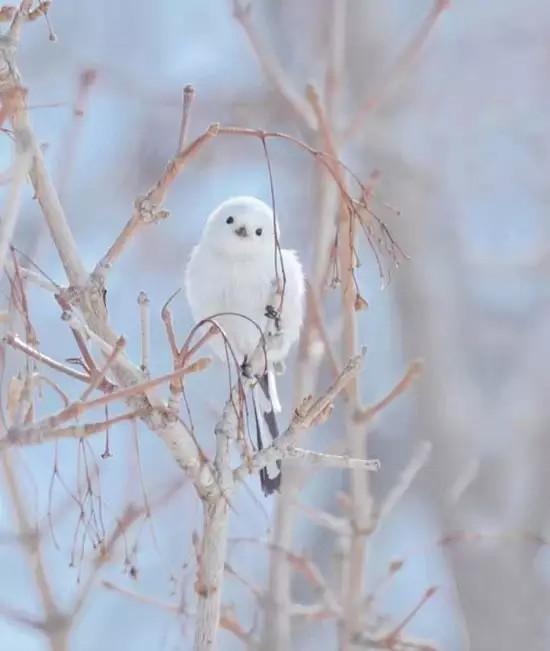 的冬天和温柔的小动物~