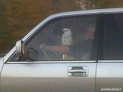 轻松一刻:这位先生,开车时间不允许玩你的宠物鹦鹉