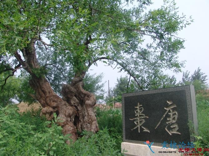 唐枣高速线路图