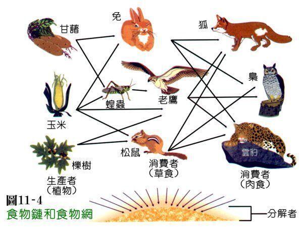 动物维持生态平衡的现象