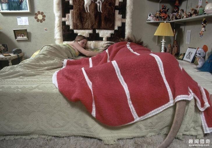 女子与雄狮同吃同睡,男友看不下去分手了! -  - 真光 的博客