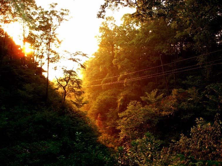 镇龙山国家森林公园