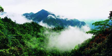 森林公园已发现的植物种类2000多种