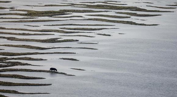 多瑙河水位降至年内最低 河床露出变猪猪觅食处