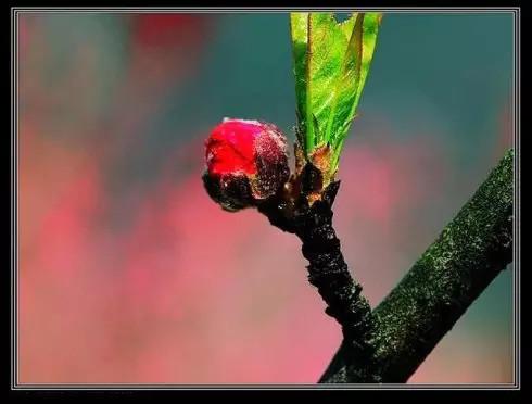 Rose【心是一个口袋(说得真好)】(5568) - Rose - Rose Yang的博客