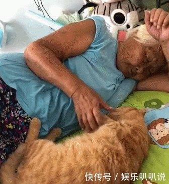 猫咪躺在床的正中央,奶奶就在一旁抚摸着哄它睡觉,画面好温馨!
