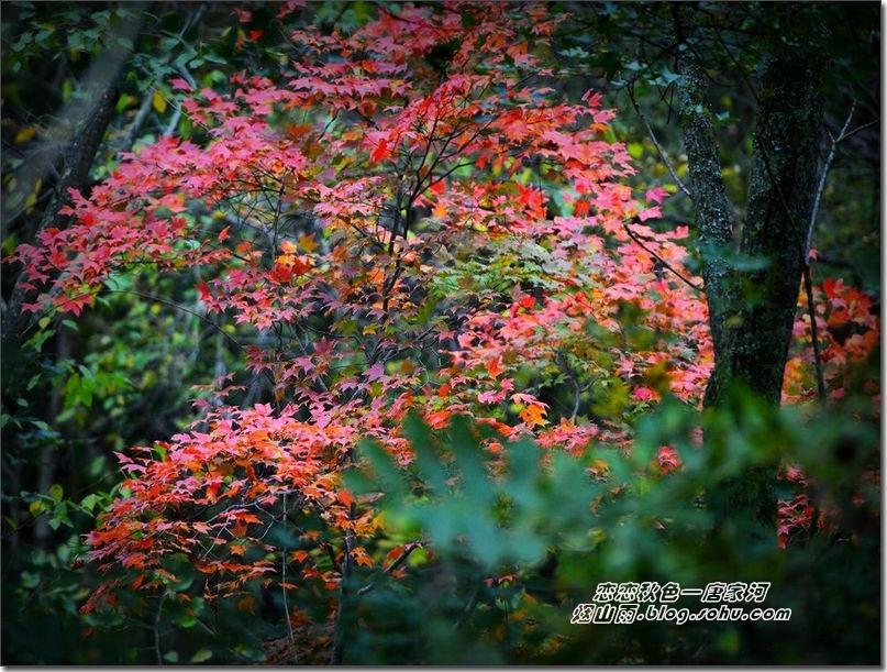 唐家河风景区的另一头,才让我感觉到了缤纷秋色.