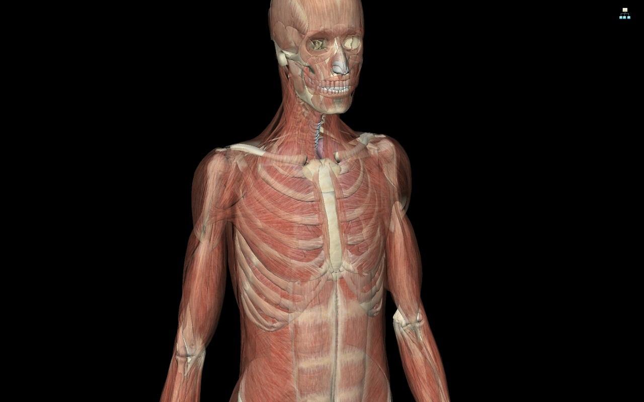 《 人体解剖学图谱 》截图欣赏