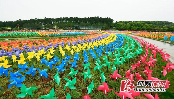 可以带着孩子,邂逅春日花海,与蝴蝶,风车浪漫互动吧.